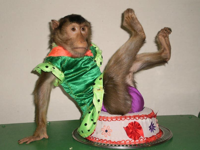 картинка обезьяна в одежде